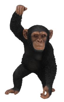 Chimpanzee Hanging