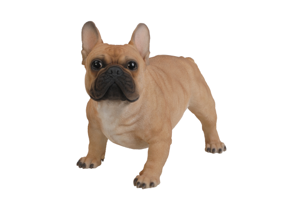 XRL-FRBD-A Golden French Bulldog A1